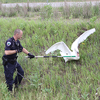 Officer Gravis - Swan Rescue